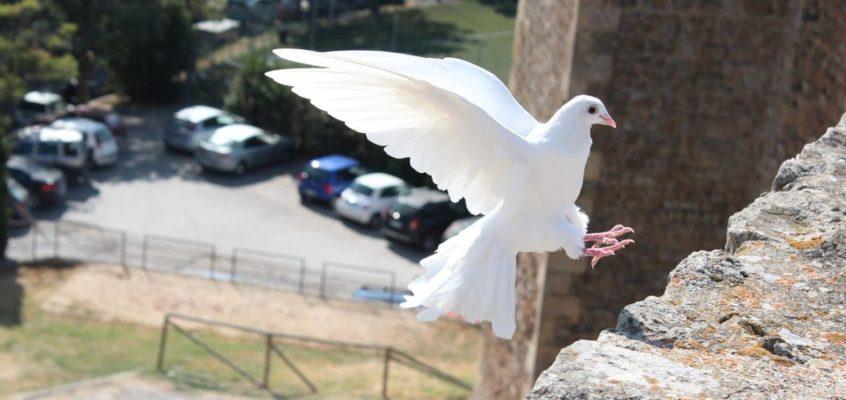 VII Niedziela Wielkanocna, Rok C (Wniebowstąpienie Pańskie)