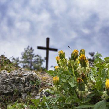 XXII Niedziela zwykła, Rok A